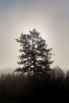 Un albero solitario