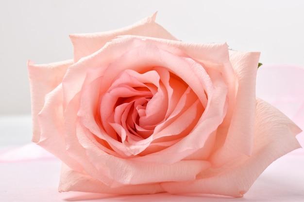 Un primo piano della rosa di rosa. sfondo festivo per un invito