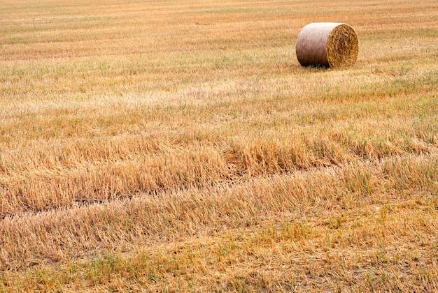 Una pila di paglia con tempo nuvoloso, un campo agricolo in autunno