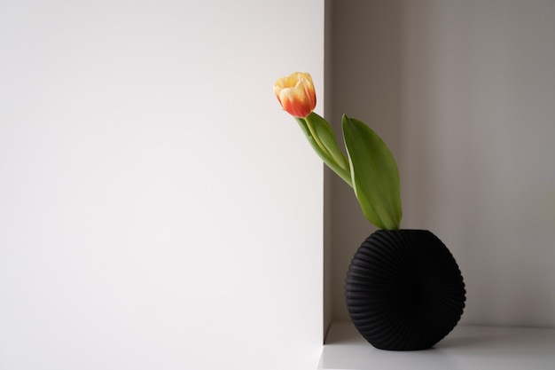 Un tulipano in vaso nero sulla mensola bianca in camera. il concetto minimo di casa accogliente. stile japandi. semplice