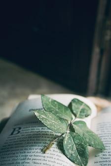 Libro aperto con foglie all'interno