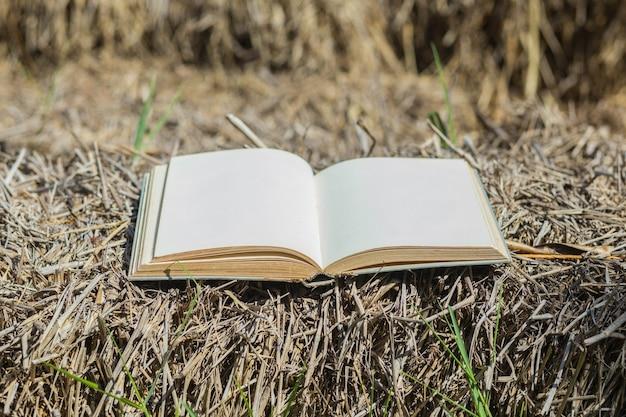 Aprire il vecchio libro primavera erba