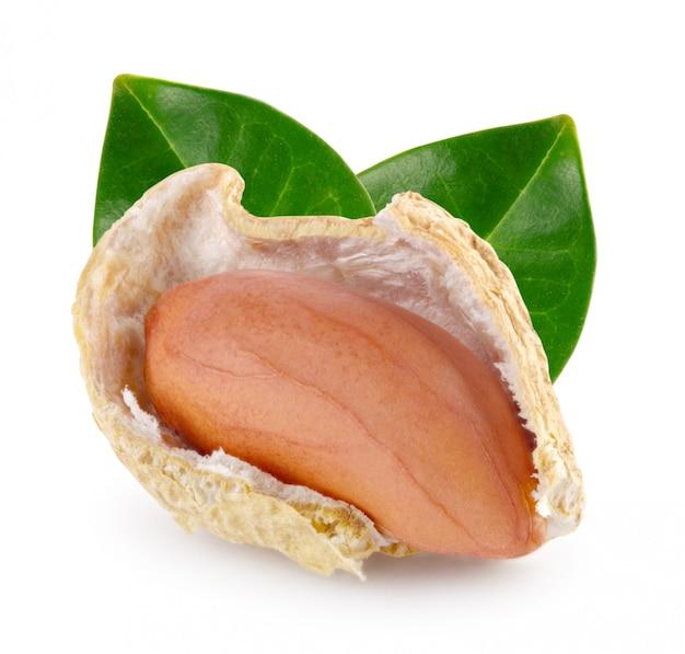 Baccello di arachidi aperto con dado e foglie verdi