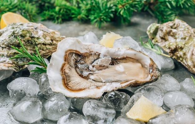 Ostriche crude aperte con limone e rosmarino. frutti di mare freschi su uno sfondo di metallo. messa a fuoco selettiva. concetto di natale