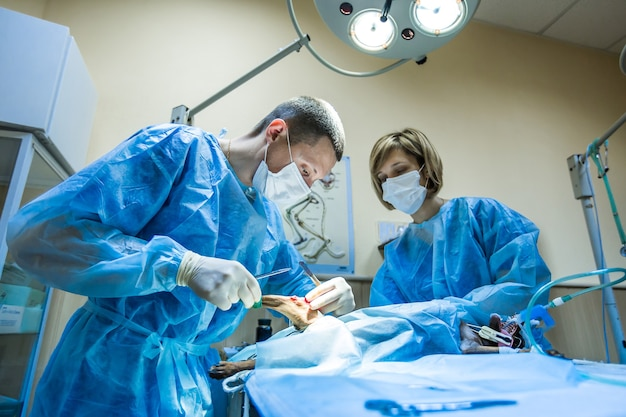 Operazione zampe cane in una clinica veterinaria.