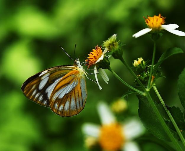 Farfalla arancione in fiore in giardino