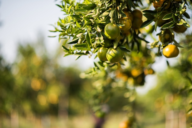 Giardino arancione