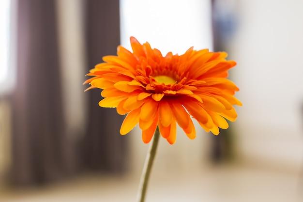 Fiore di gerbera arancione.