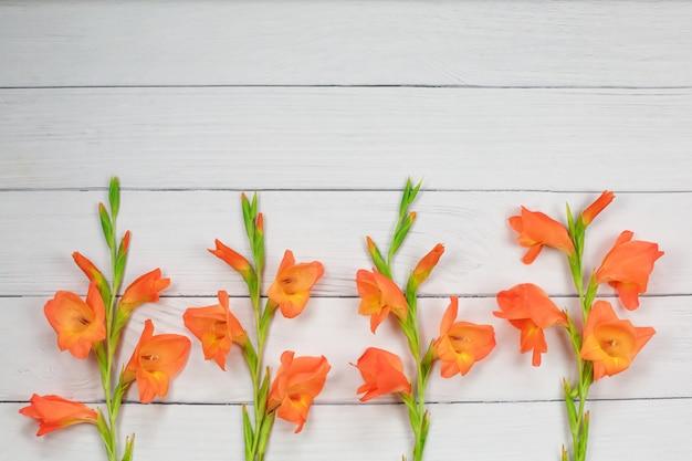 Fiore arancio di gladiolo su fondo di legno bianco
