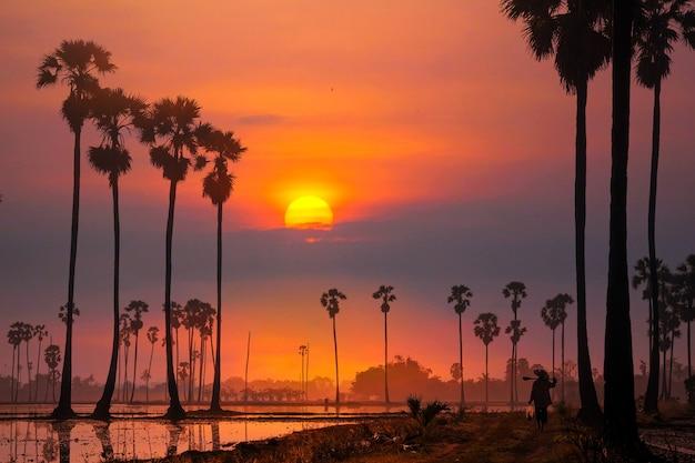 Cielo mattutino sfumato arancione con sfondo di sagome di palme alte