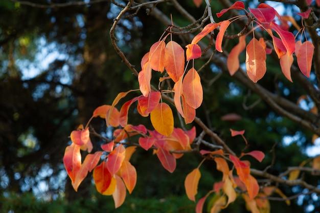 Foglie di arancio in autunno su un albero
