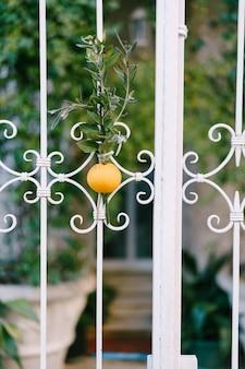 Un'arancia e un ramo di quercia inchiodati alla porta di una casa badnjak è una festa nazionale serba