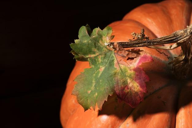 Zucca arancione con foglia colorata. avvicinamento. autunno giorno del ringraziamento. concetto di autunno raccolto di bellezza.