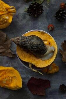 Zucca arancione, con una grande lumaca in cima su una superficie scura
