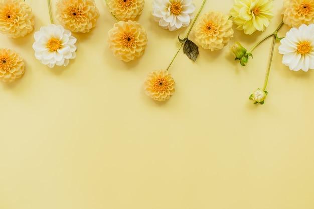 Arancio, bianco, fiori dalie su sfondo giallo pastello. composizione di fiori. lay piatto, vista dall'alto, copia spazio. estate, concetto di autunno.
