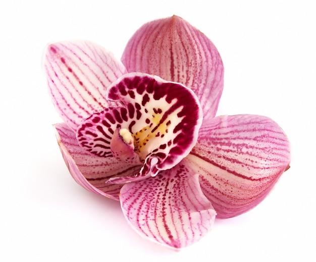 Fiore dell'orchidea su un primo piano bianco del fondo