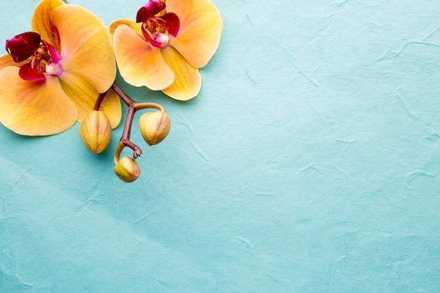Fiore dell'orchidea sui precedenti di legno.