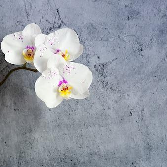 L'orchidea fiorisce su un ramo contro una parete dello stucco