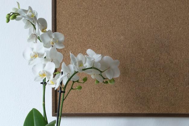 Orchidea isolato su sfondo bianco e tavola di legno. primo piano di bei fiori dell'interno. regalo.