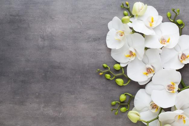 Pietre dell'orchidea e della stazione termale sulla pietra. spa e benessere laici piatta.