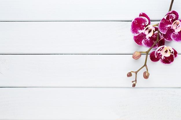 Orchidea su uno sfondo bianco. scena spa e benessere.