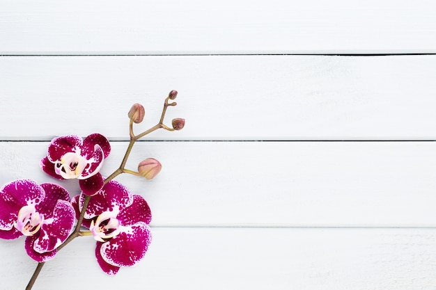 Orchidea su bianco. spa e wellnes flat lay.