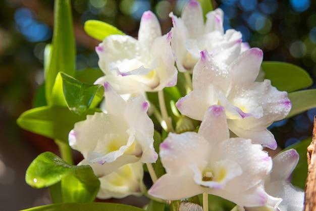 Orchidee, bellissime orchidee trovate sugli alberi in piazze e parchi, messa a fuoco selettiva.