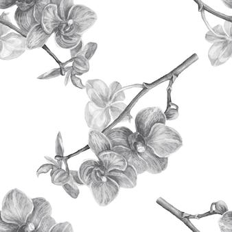 Illustrazione disegnata a mano dell'acquerello esotico dei fiori delle orchidee