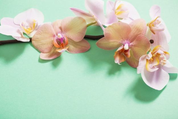 Orchidee su sfondo verde
