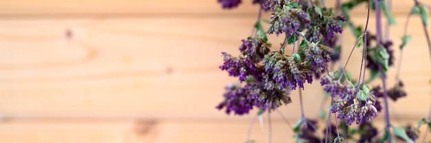 I mazzi di origano asciugano l'essiccamento della pianta di erbe medicinali