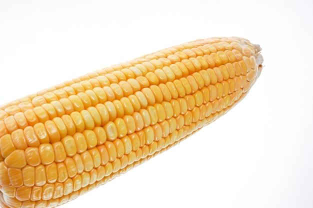 Pannocchia di mais organico isolato su sfondo bianco.