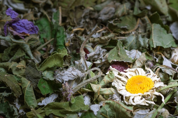 Primo piano estremo di struttura del fondo del tè di erbe essiccato organico