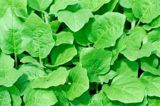 Agricoltura biologica, piantine che crescono in serra.