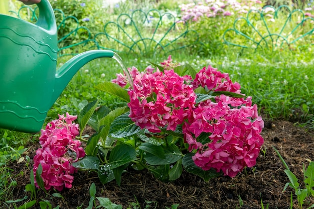 Orto biologico con irrigazione e piantine in giardino
