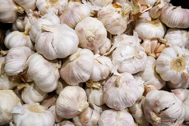 Raccolto di agricoltura biologica grande aglio.
