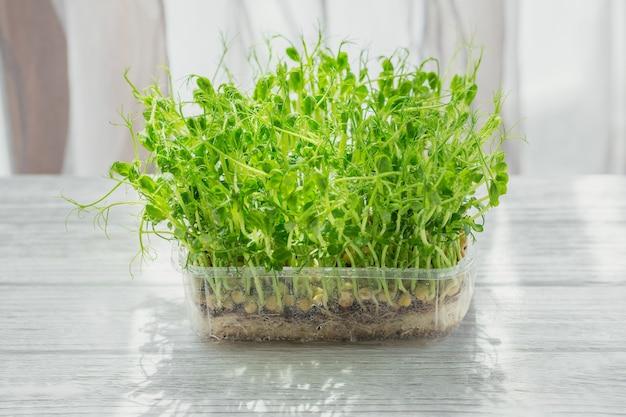Germogli organici del microgreen del pisello che crescono in una scatola di plastica nel fondo bianco. frash germogli crudi, micro verdure, concetto di cibo sano