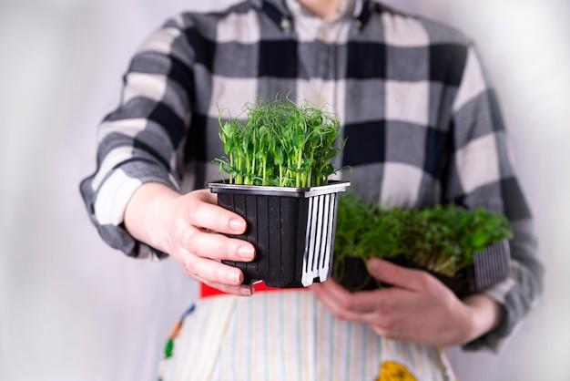 Microgreens crudi biologici. la donna tiene in mano una scatola con germogli di microgreen. concetto di pasto sano super. consegna di microgreens.
