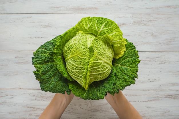 Verdure biologiche. mani degli agricoltori con cavolo appena raccolto. verza fresca.