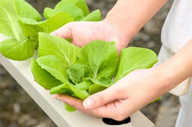 Verdure biologiche. mani degli agricoltori con verdure appena raccolte.