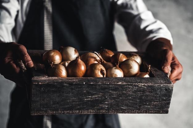 Verdure biologiche. cibo salutare. cipolla biologica fresca nelle mani degli agricoltori.