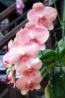 Pianta ornamentale in giardino