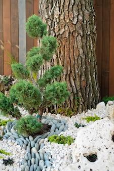 Albero ornamentale, giardino lussureggiante, sentiero in pietra. serata d'estate accogliente