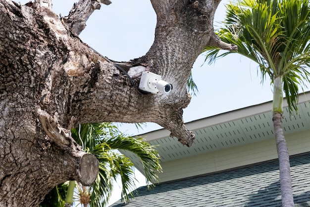 Telecamera cctv esterna appesa a un albero.