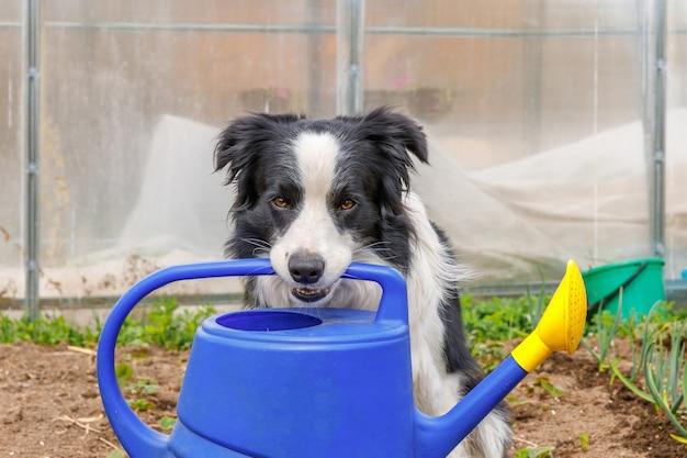 All'aperto carino cane sorridente border collie che tiene annaffiatoio in bocca