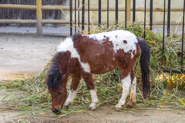 Pony all'aperto a rio de janeiro in brasile.