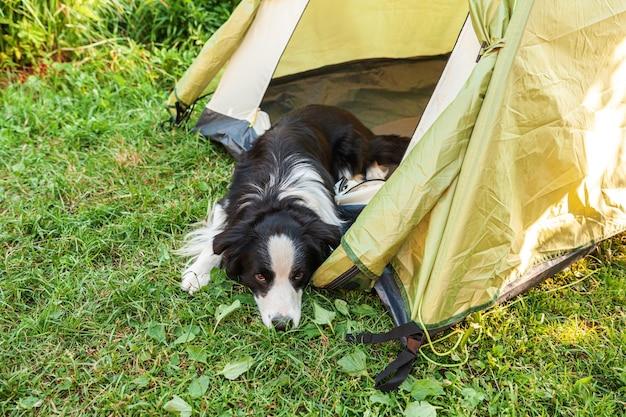 Outdoor ritratto di carino divertente cucciolo di cane border collie sdraiato all'interno in tenda da campeggio