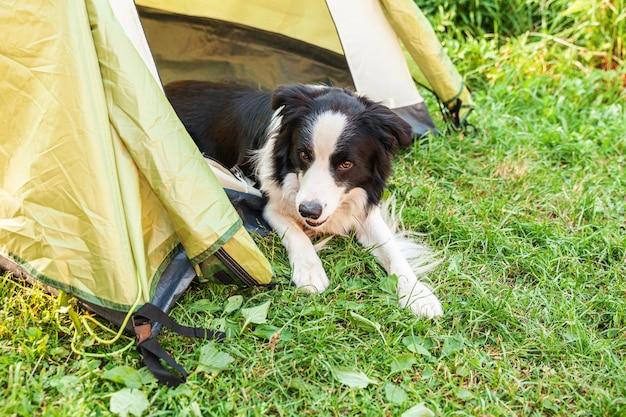Outdoor ritratto di carino divertente cucciolo di cane border collie sdraiato all'interno in tenda da campeggio.