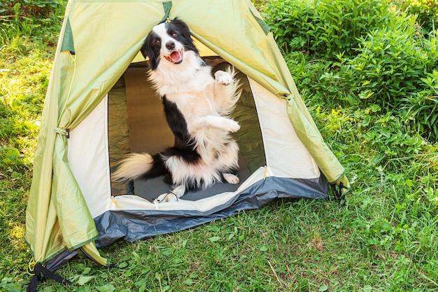 Outdoor ritratto di carino divertente cucciolo di cane border collie seduto all'interno in tenda da campeggio