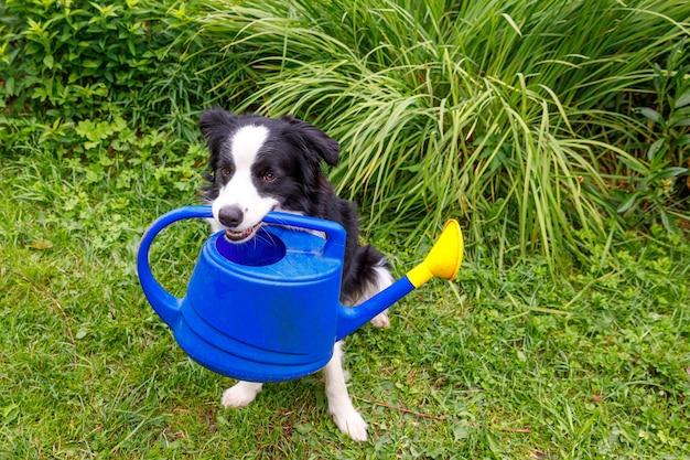 Ritratto all'aperto di carino sorridente cane border collie tenendo annaffiatoio su sfondo giardino. cucciolo divertente come giardiniere