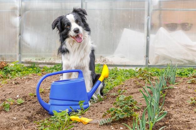 Ritratto all'aperto di un simpatico cane border collie sorridente con annaffiatoio